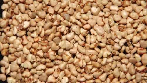 Patente a sustrato de fermentación con semillas de guayaba